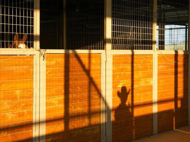 Rocking Ranch with Barn Shadow