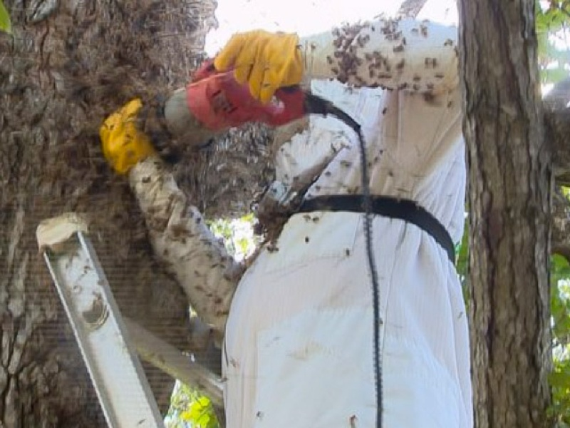 Gotcha Pest Control removes bees that killed a family dog 1 August 2013 RUN FLAT