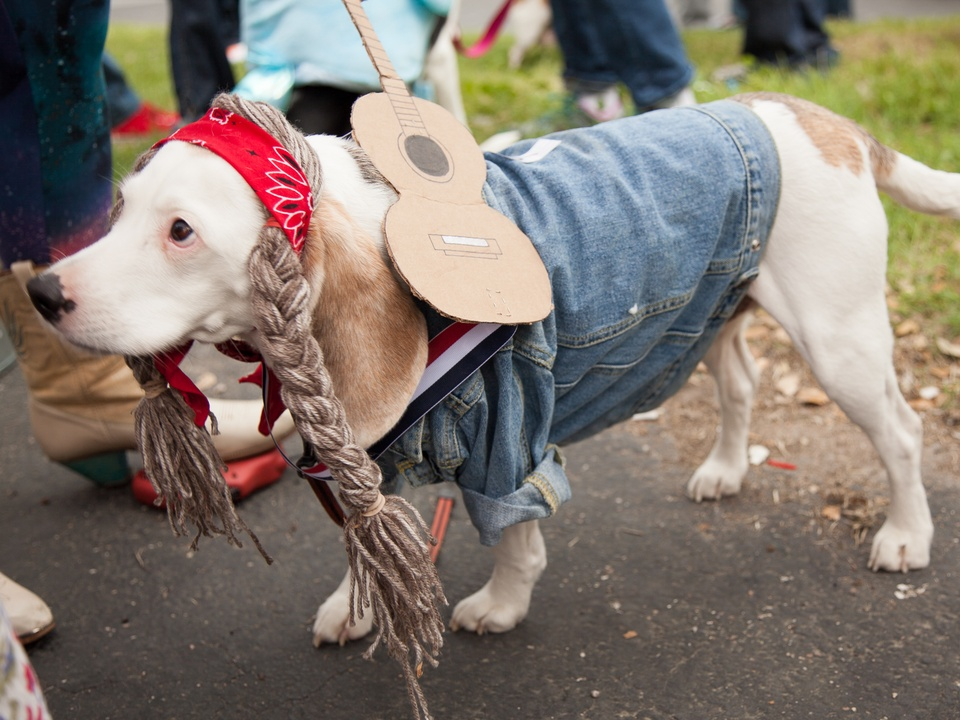 Jo's 16th Annual Pet Parade in Austin Chunk Willie Nelson