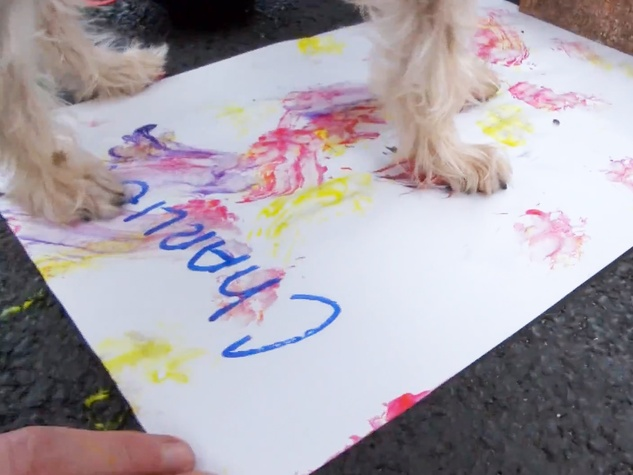 painting with your pet Charlie screen shot from YouTube