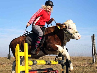 Woman rides jumping cow
