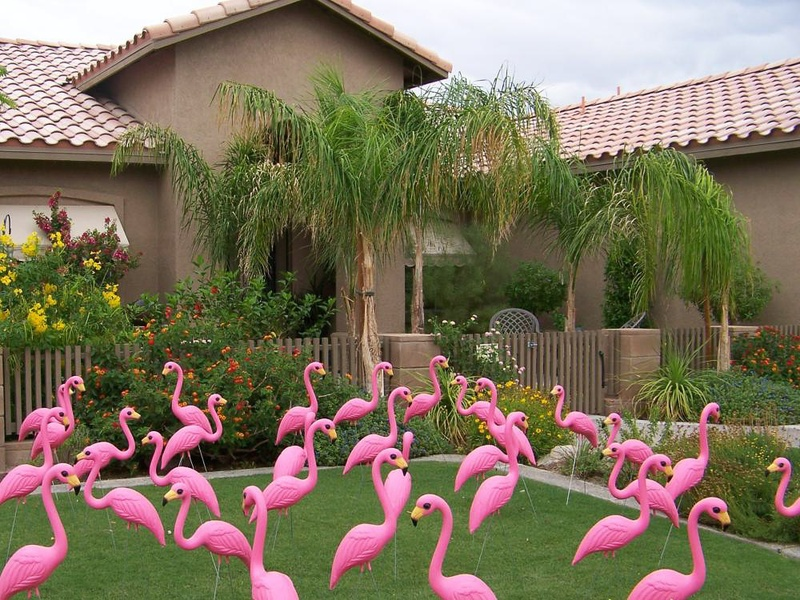News_Pink Flamingos_yard