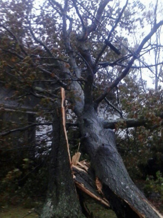Hurricane Sandy, Point Pleasant, downed tree, October 2012