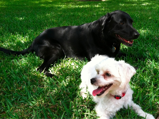 Dogs relaxing at the park