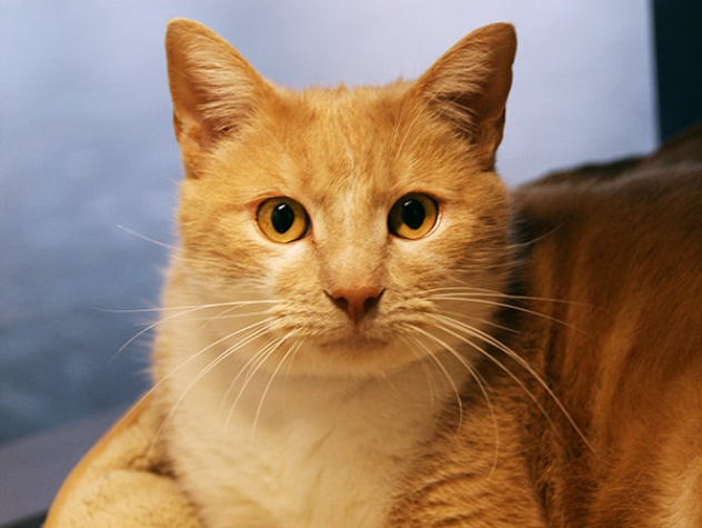Pretty Boy, SPCA Pet of the Week