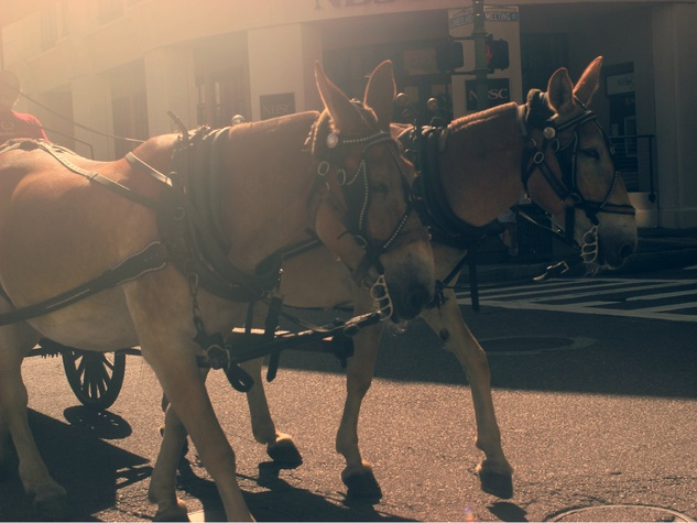 charleston, horse drawn carriage