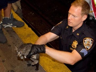 Kitten rescued on New York Subway tracks