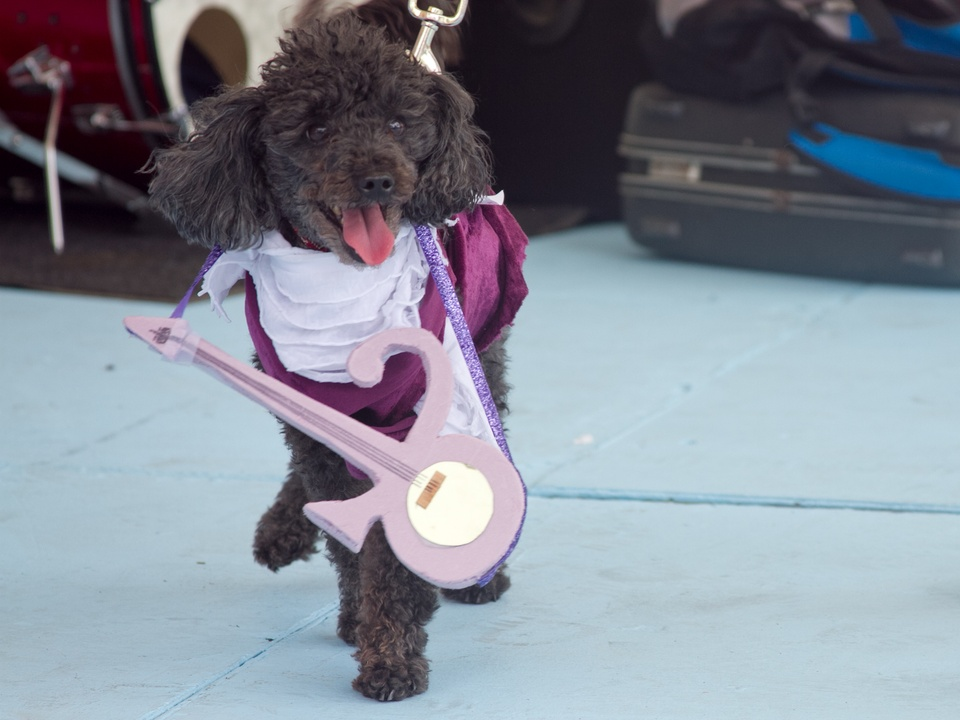 Easter Pet Parade on South Congress 2014 Prince Dog Costume