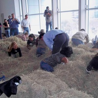News_RodeoHouston_February 2012_roundup