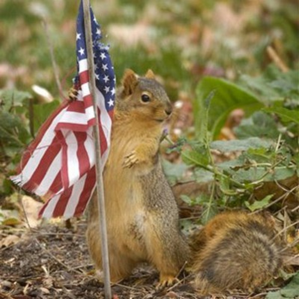 Austin photo: News_Patriotic Pets_Squirrel