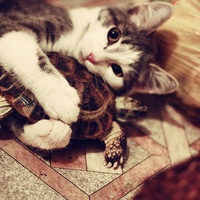 Cat cuddles turtle