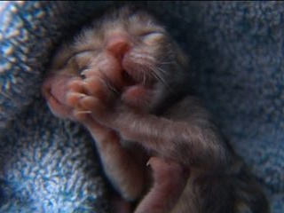 A two-faced kitten was born in Oregon