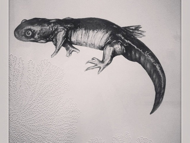 Art.Science.Gallery Salamander
