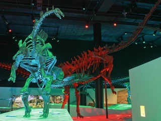 Museum of Natural Science gala, March 2013, dinosaurs, skeletons