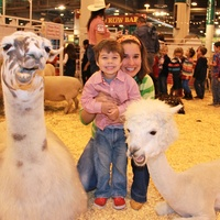 RodeoHouston, family friendly attractions, March 2013, petting zoo