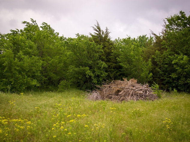 Photo of brush pile made of cedar trees