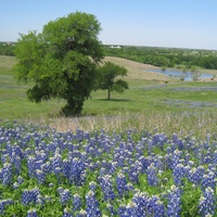 Austin Photo Set: News_Robyn_Hill country conservancy_april 2012_bluebonnets