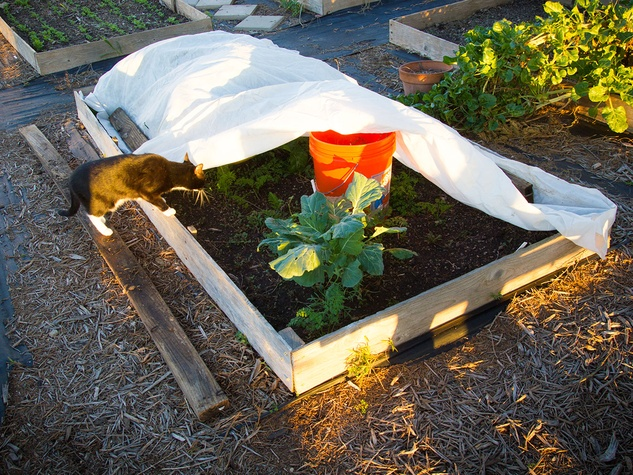 Photo of raised garden bed covered by frost blanket