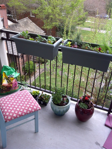 Growing Fresh Herbs, Herb Garden Patio