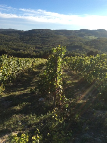 Jane Howze Italy trip Tuscany September 2014 Tuscany vineyards