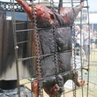 Roasting pig at the Austin Food and Wine Festival Fire Pits