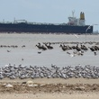 7. Katie Galveston oil spill Part 3 Interconnection April 2014 Bolivar Flats..jpg