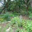 Mayfield Nature Preserve_Austin_volunteer garden_2015