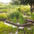 Photo of raised garden beds in flood water