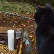 Cat looks at fill tube in wicking garden bed