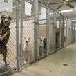 Dogs at an animal shelter