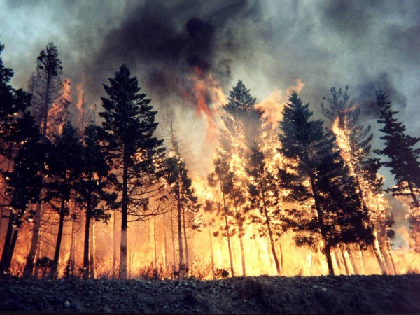 News_wildfire_trees