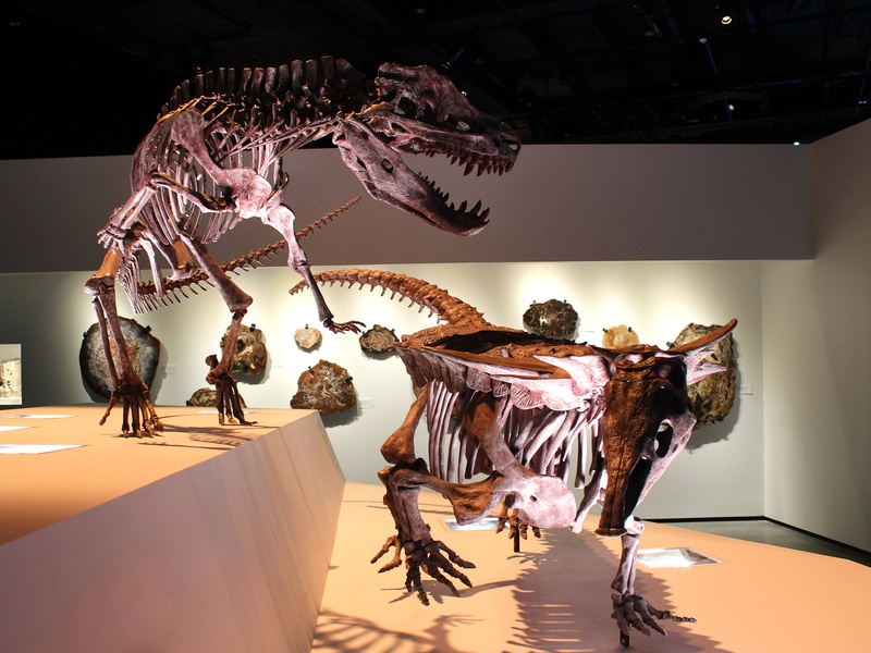News_Houston Museum of Natural Science_Paleontology Hall_May 2012