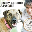 "johnny goudie with apache of Austin Pets Alive! for ""music and mutts"""