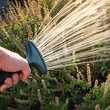 Garden crops being watered.