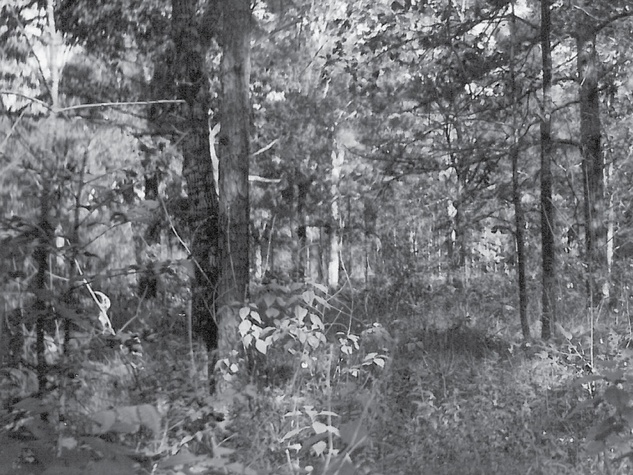 Image of Memorial Park Woodlands Circa 1938 as cited in An Ecological Study in Memorial Park by Marguerite Key Fitzgerald