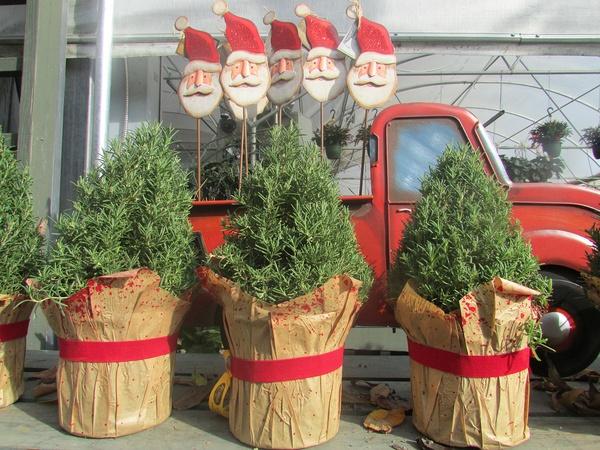 Houston Garden Center Christmas Trees