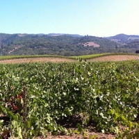 News_Jayme Lamm_wine country trekking_March 2012_Sonoma Valley