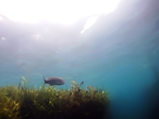 Underwater view of Barton Springs courtesy of Submerged