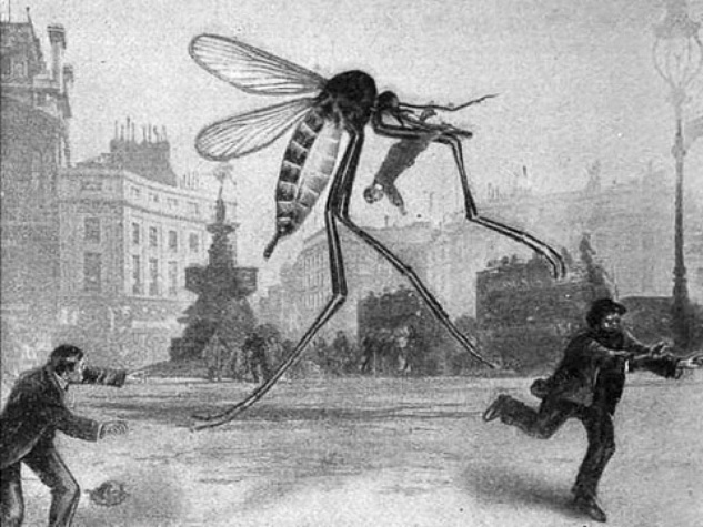 News_Attack of the Giant Mosquito