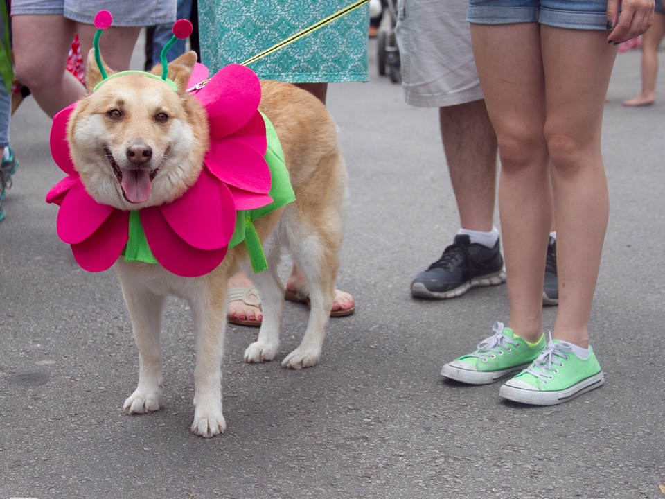 Easter Pet Parade on South Congress 2014 Flower Dog Costume