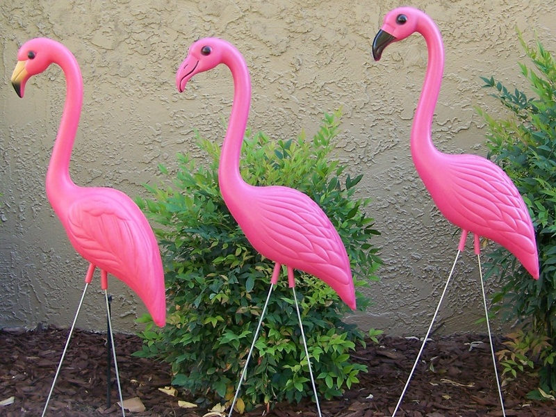 News_pink flamingos