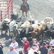 Great Bull Run 08