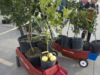 Urban Harvest's 14th Annual Fruit Tree Sale