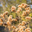 Photo of dried wildflowers