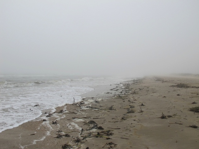 13 Katie Oxford Galveston birds and the oil spill April 2014 Fog in the afternoon. Caplen Beach, Bolivar peninsula