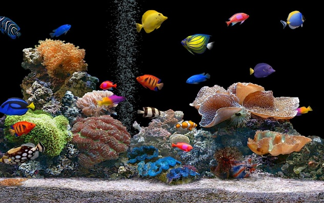 Austin Photo Set: News_melissa_aquarium breeding_may 2012_color fish