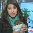 KHOU News reporter Jackie Crea holds baby kinkajou left orphaned by dog attacks January 2014 at Houston exotic pet store