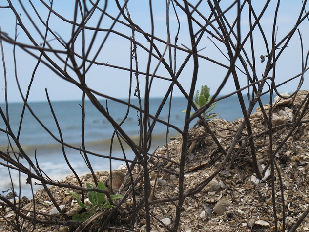 5 Katie Oxford seaweed April 2015 Plants latch on to it. . .""