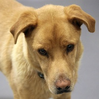 miles, SPCA of Texas, adoption