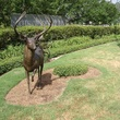 News_deer_The Woodlands_stolen